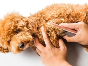 matted-hair-dog-480515462